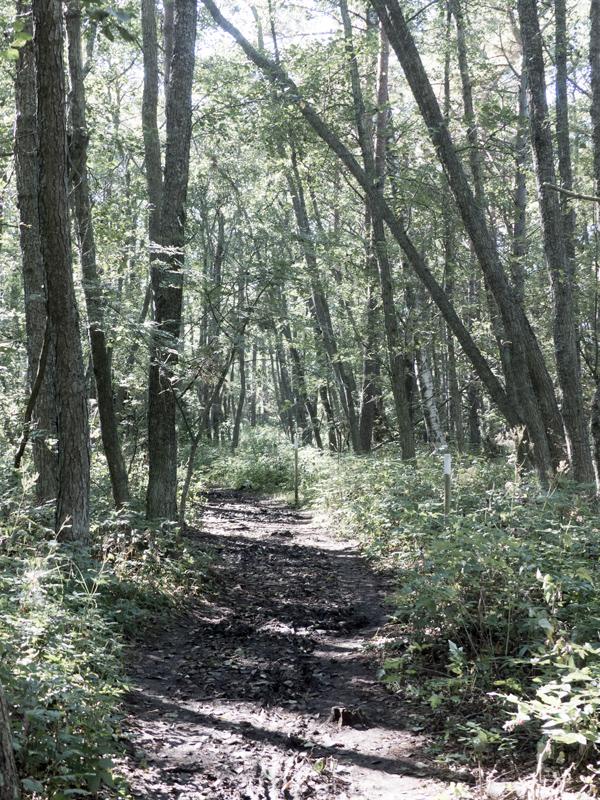 Uddskatan, hanko, luontopolku, metsä, luonto, hulluna hankoon,