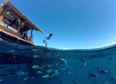 Alam bawah air yang tanpa duanya - Bangsring Underwater