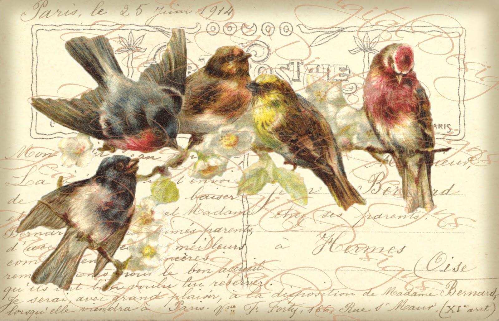 Vintage Bird Postcard 48