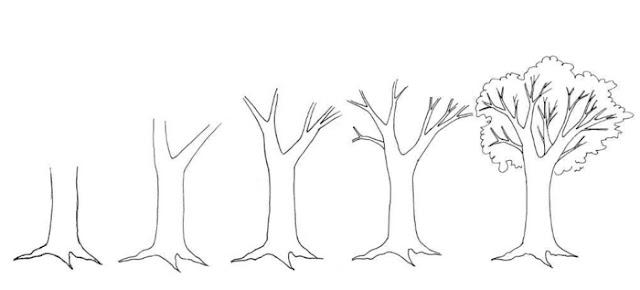 كيفية رسم شجرة بالقلم الرصاص خطوة بخطوة
