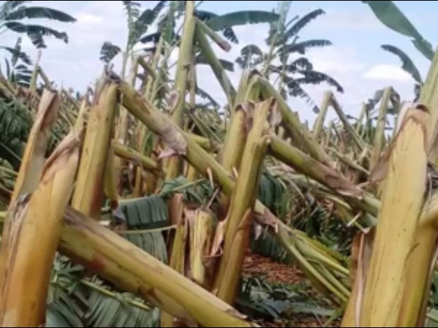 Forte ventania destrói plantações e causa prejuízo de R$ 2 milhões no CE