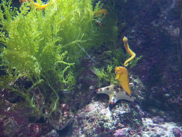 SEA Aquarium Singapore Seahorse Exhibition