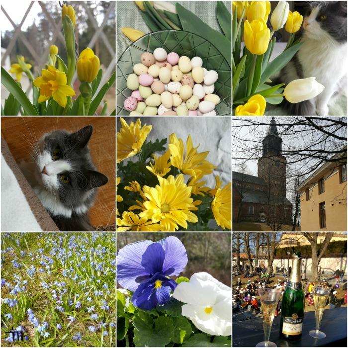 huhtikuu 2017 - pääsiäinen, kissa, tulppaanit, narsissit, orvokit