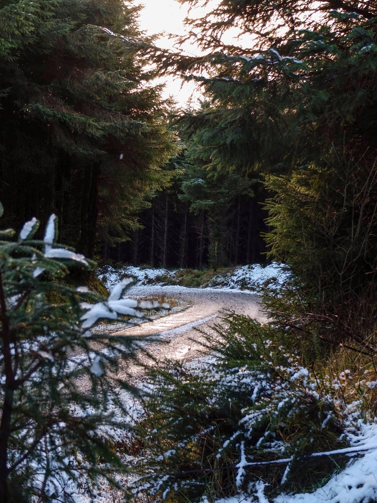 A curved woodland track surrounded by melting snow in the Boggeragh Mountains, County Cork.