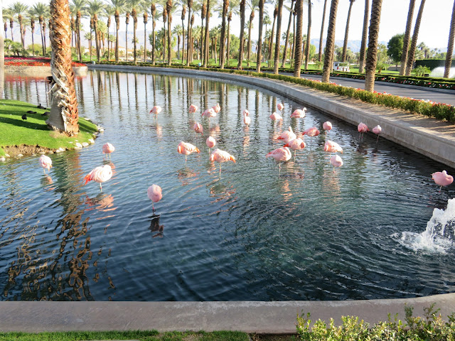 Flamingos and Coots in Resort Pond Winter 2018