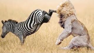 wild-animal