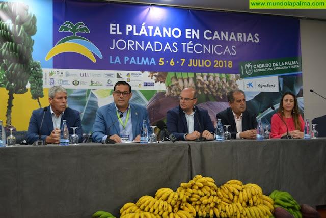 Las jornadas técnicas del plátano apuestan por 'un cultivo diferenciado y de calidad que pueda competir en el mercado internacional'