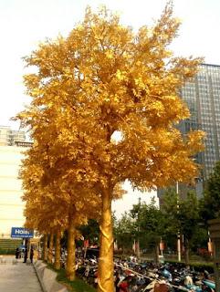 pohon emas
