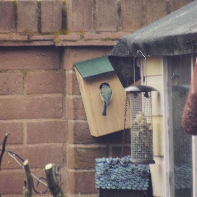 Bird Feeding Young in Box