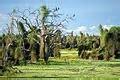 Dans la région du Chaco prédominent des formations forestières de bois dur