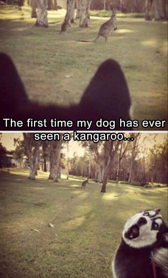 #Funny #Animal Of The Best Funny Animal Pictures Ever
