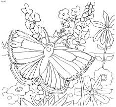 Cute Butterfly On Garden Coloring Pages For Kids