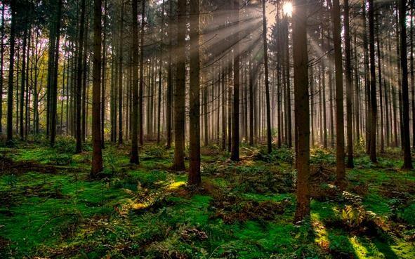 los recursos forestales