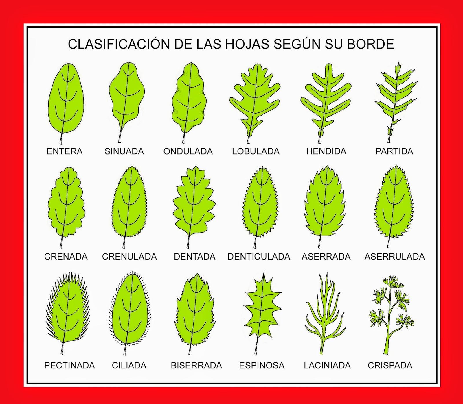 R b o l e s t r e e s tipos de hojas simples for Tipos de arboles y sus caracteristicas