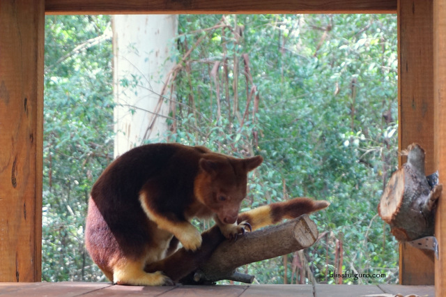 Currumbin Wildlife Sanctuary Review
