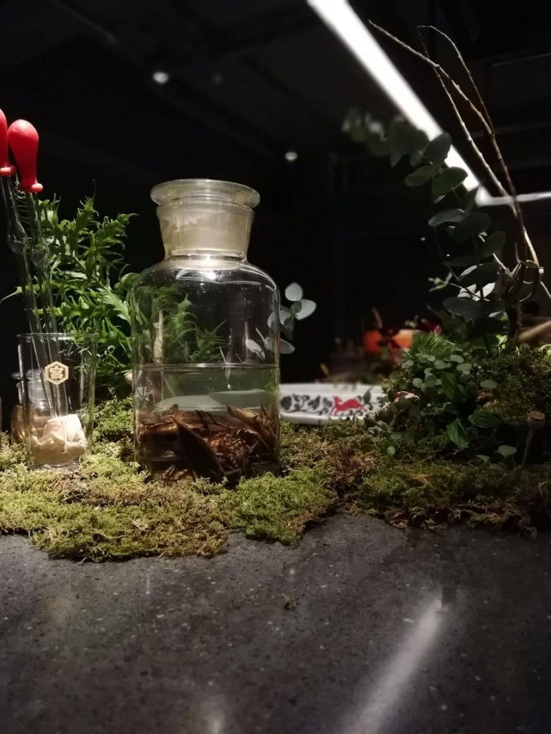 3 Image What Live Plants Are Safe for Betta Fish