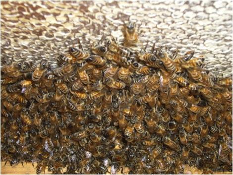Εσύ το γνώριζες πως επιβιώνουν οι μέλισσες το Χειμώνα;