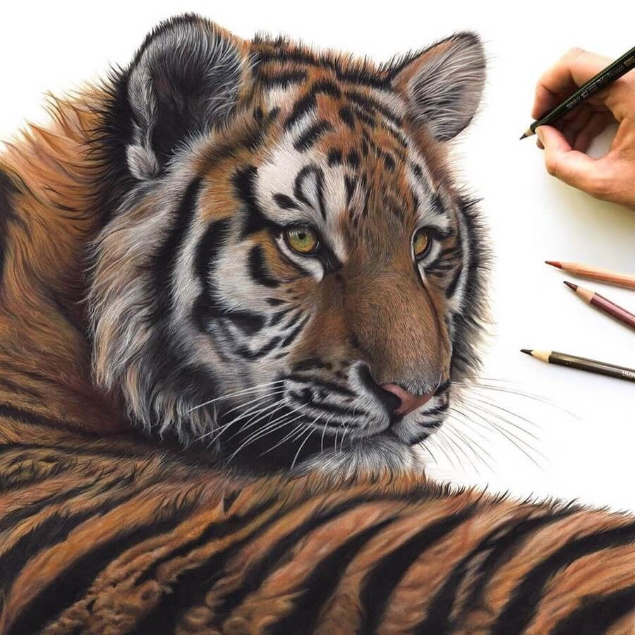 08-Tiger-Claire-Milligan-www-designstack-co