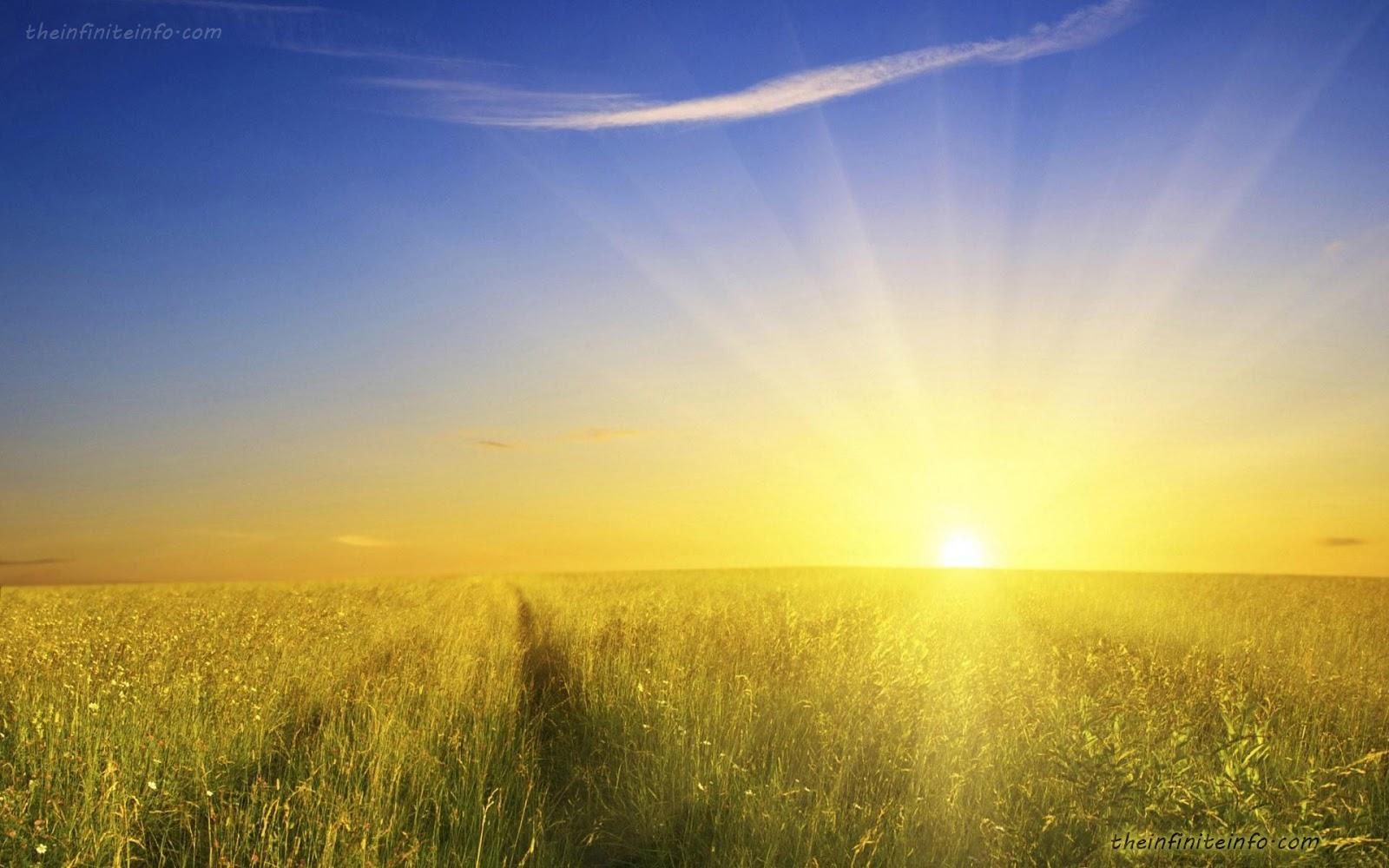 Wallpaper: A Cup Of Sunshine Wallpaper
