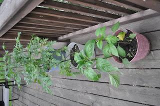 Rooftop Pot Garden