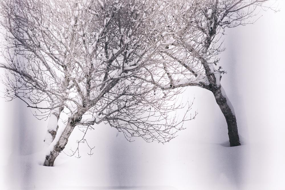 Espoo, Suomi, Finland, experience finland, discover finland, talvi, winter, january, tammikuu, valokuvaaja, Frida Steiner, Visualaddict, visualaddictfrida, trees, puut, nature, luonto, luontokuva, naturephotography, chill, frost