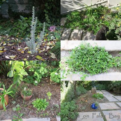 Lowland fynbos LIFE plants