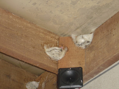 Posisi Tweeter Yang Paling Cepat Membuat Burung Walet Membuat Sarang
