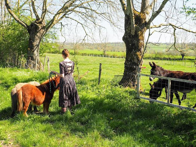 mini Shetland pony's