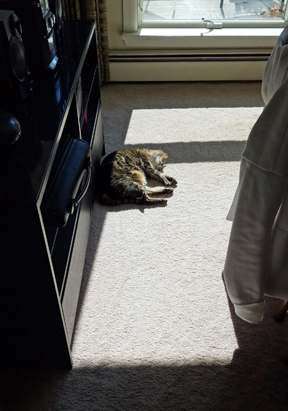 image of Sophie the Torbie Cat curled up in a spot of sunshine on the dining room floor