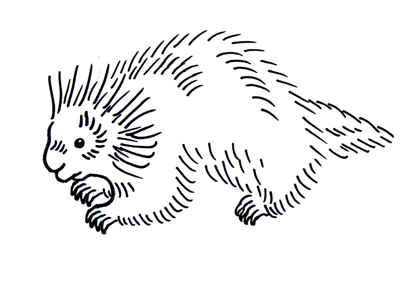 porcupine coloring pages porcupines coloring pages free coloring