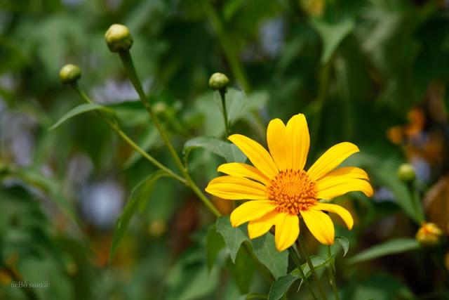 cay hoa da quy dep nhat