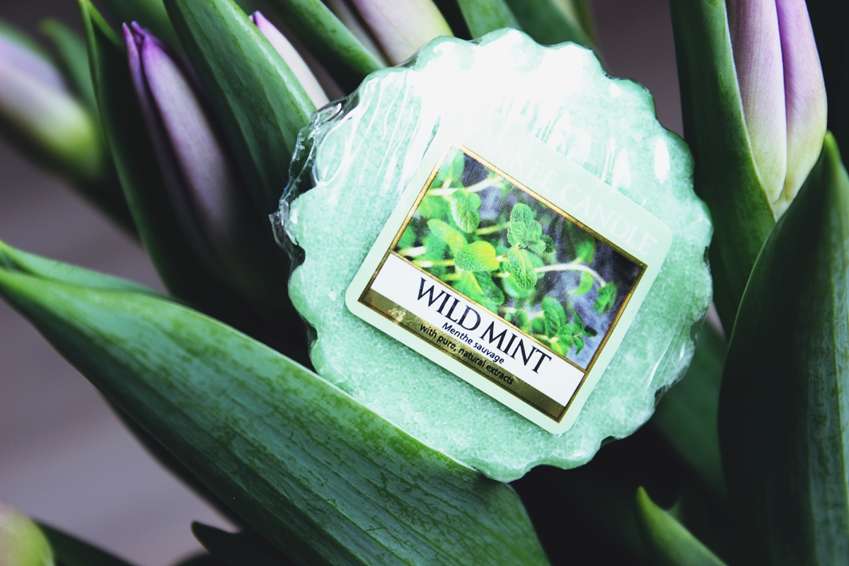 yankee candle wild mint wosk