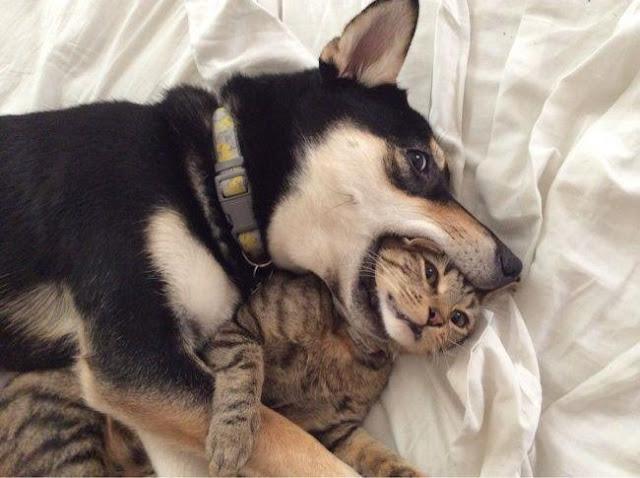 """""""Cười sái quai hàm"""" khi xem chùm ảnh về chó mèo này"""