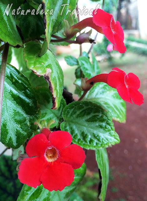 Naturaleza tropical 6 plantas ideales para espacios peque os for Que son plantas ornamentales