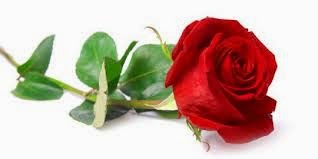 Manfaat bunga mawar bagi kesehatan tubuh