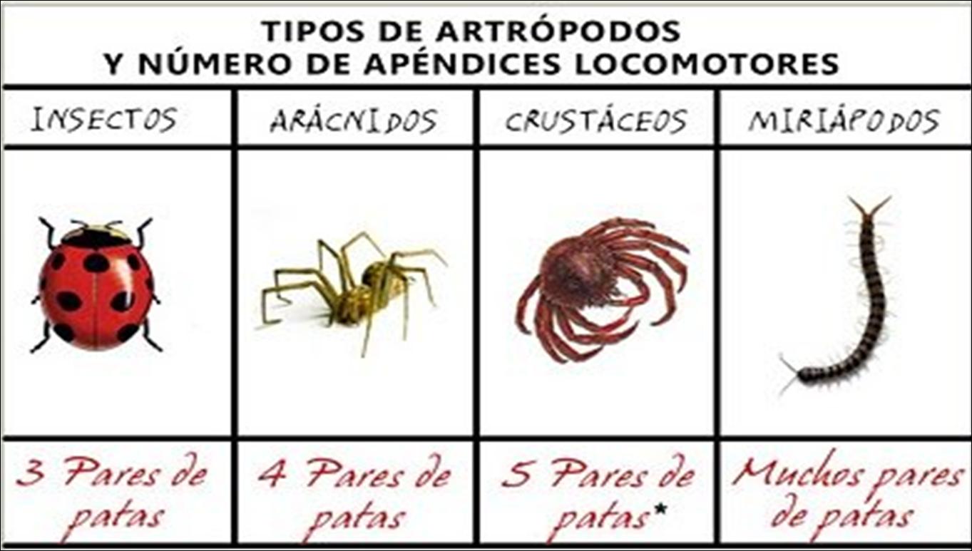 La Clase De Cuarto Del Picasso 2016