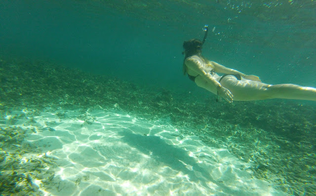 Snorkeling at Shark Bay