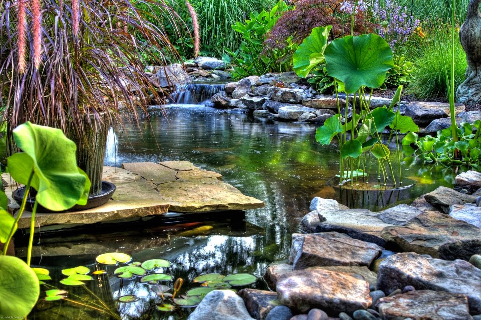 Taman Kolam Minimalis Sederhana Dan Cantik