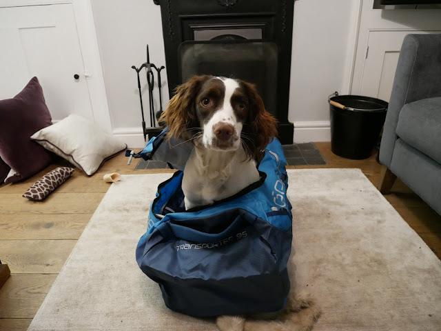 Osprey Transporter 95 - including Springer Spaniel Pip