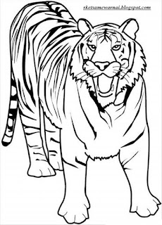 Gambar Mewarnai Harimau : gambar, mewarnai, harimau, Mewarnai, Harimau, Gambar, Kelabu