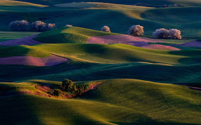 Palouse Region, Washington State, Amerika Serikat