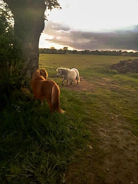 Shetlandpony's Macaron en Eclair.