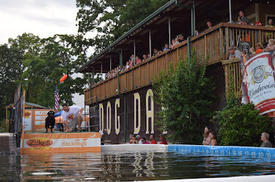Dog Days Bar & Grill, Lake of the Ozarks, Canine Cannonball