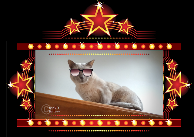 Faraday with movie-star shades on: incognito cat is incognito.
