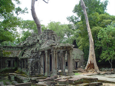 Jungle di Angkor Wat - Cambogia