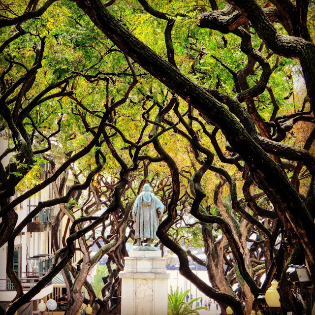 Statue and gnarled shade trees in Funchal, Madeira