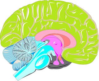تنميل الرأس، الرأس، اسباب تنميل الرأس، علاج تنميل الرأس، Tingling the head, Head, Causes of numbness of the head, Treatment of numbness of the head,