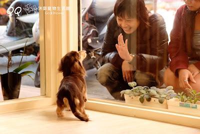 沐御寵物美容生活館推薦新莊寵物美容認真負責的寵物美容師平價格便宜合理天然洗劑寵物零食用品思源路與 ...