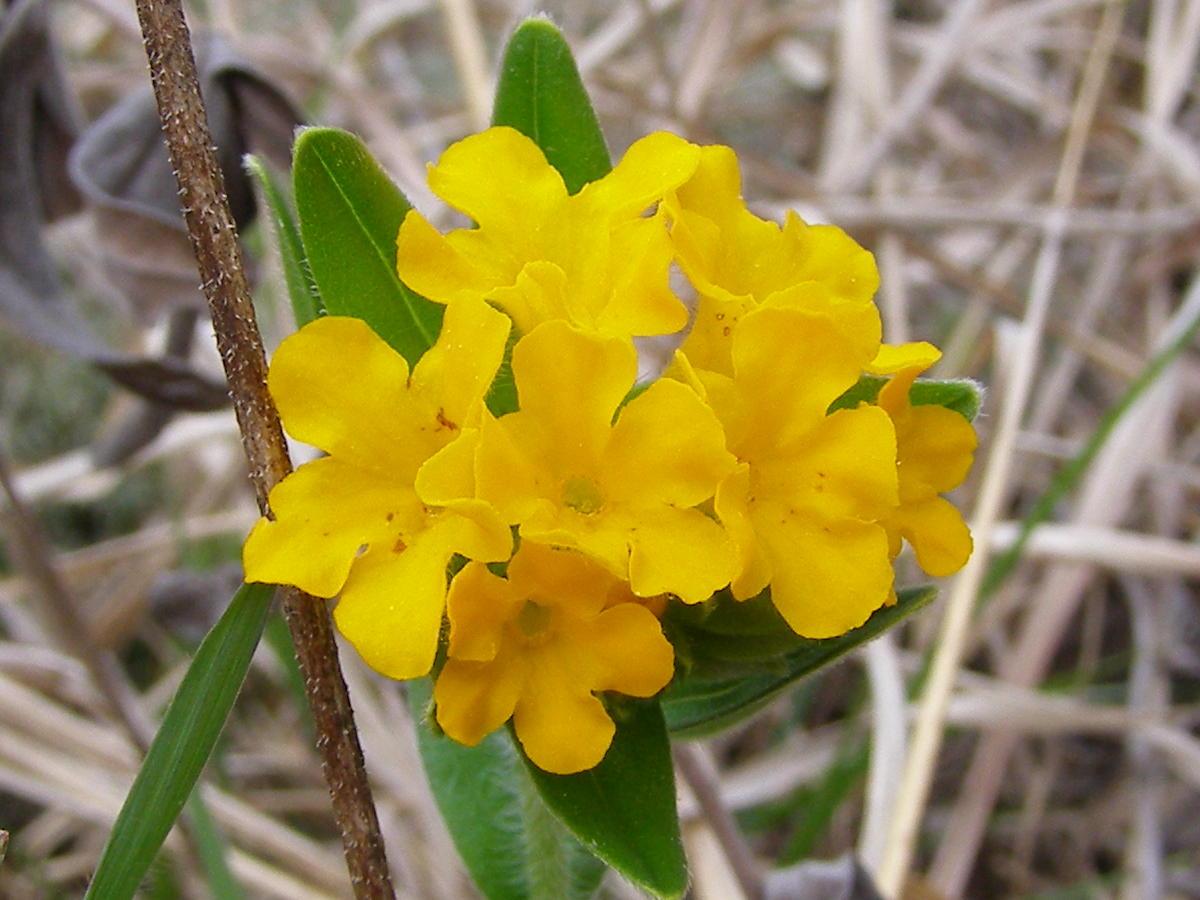 Blue Jay Barrens Some Prairie Flowers