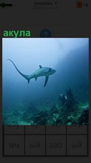 Под водой плавает большая акула